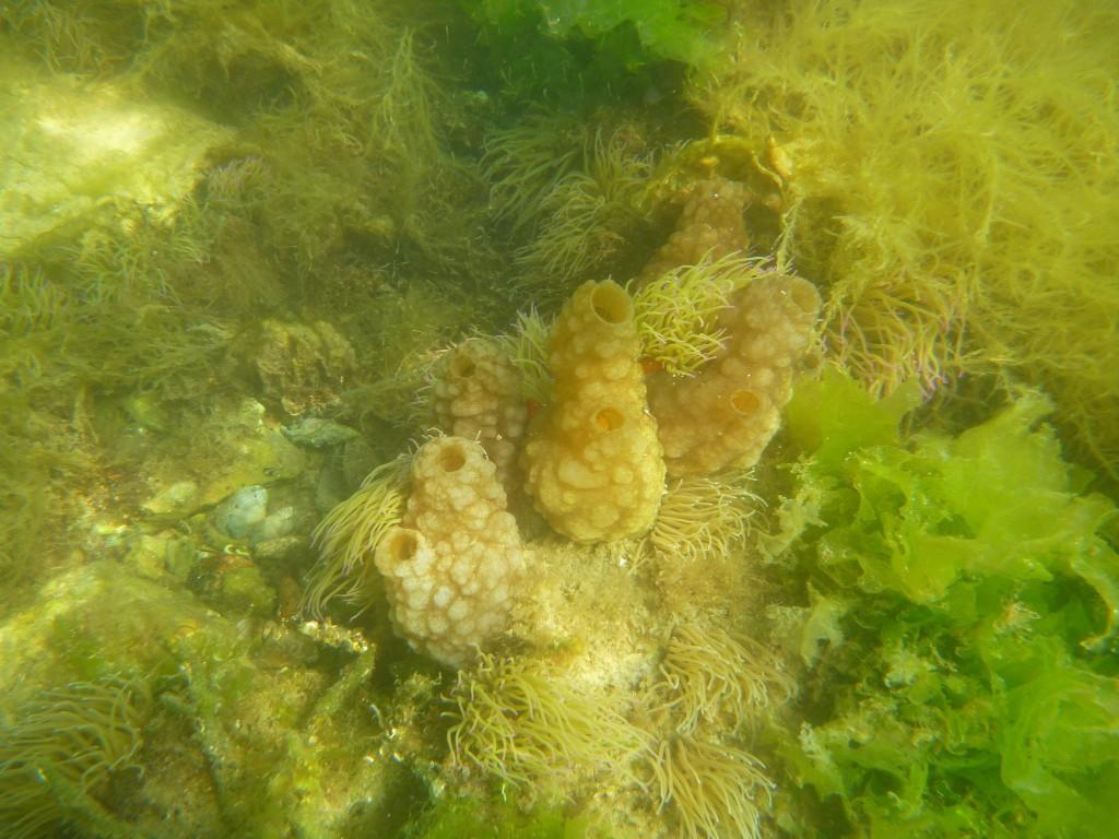 Étrange monde sous-marin
