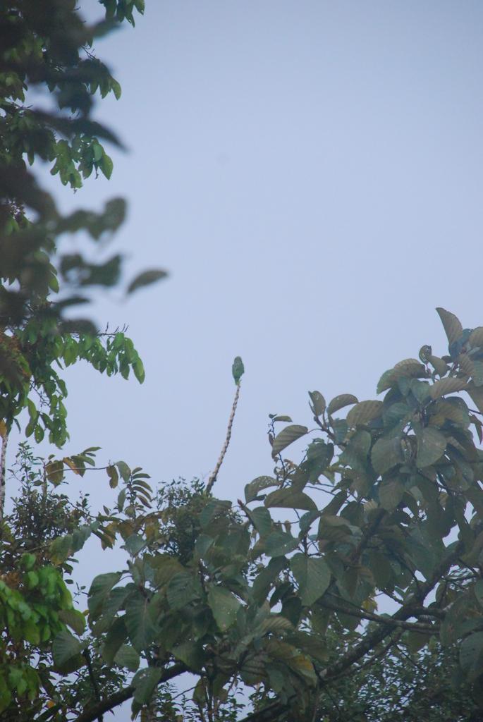 C'est un perroquet en haut de la branche.