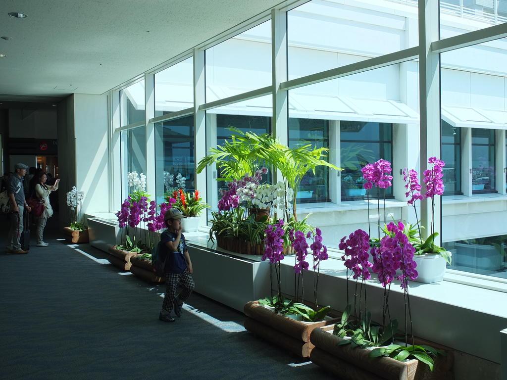 Orchidées à l'aéroport de Naha