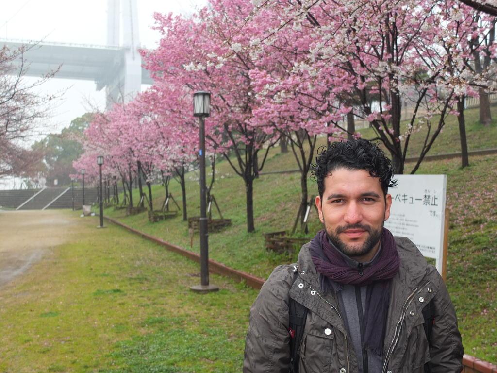 Des cerisiers et des fleurs